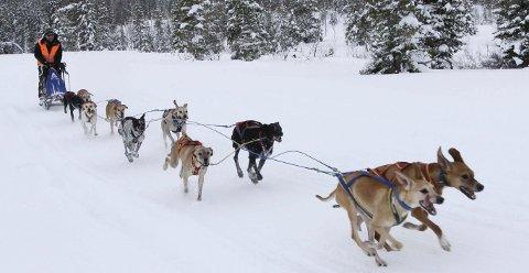 FART: Når Rune Haugmo setter i gang med 10 hunder i spannet går det unna i Herringen Trail på Sjåmoen. Han var alene i åpen klasse, og han brukte løpet som oppvarming til Norway Trail som er en internasjonal konkurranse med fire etapper.  FOTO: PER VIKAN