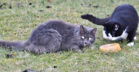MERK: Om ikke katten din er merket vil det være lurt å gjøre det før Moss og Omegn Dyrebskyttelse mandag 20. januar skal begynne innfangingen av løskatter i Varnaveien og Dyreveien.