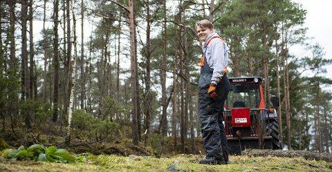 Martin Flåten Langhelle (16) trives så godt på Alvøen gård hos bonden Didrik Fasmer, at han er her i ferien. Her vinsjer stokker fra furuen han akkurat har sagd ned.