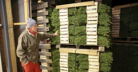 Solgt: Eidskog kommune har kjøpt fire paller med 8.000 planter i hver. Resten skal plantes rundt omkring på hele østlandet. Foto: Tina Alnes-Jørgensen
