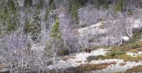 Her dukker bjørnen opp. Se video nederst i saken.