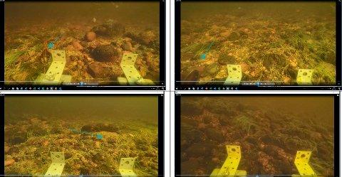 SJELDEN: Bildet er fra Lågens bunn vær Jondalselvas utløp. Elvemusling er utrydningstruet, dels på grunn av forurensing og fordi vertsfisken - ørret - er på vikende front.