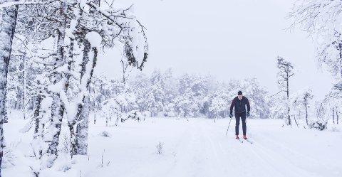 VINTERDRØM: Jan-Erik Fredriksen i kjent stil på tur i Trømborgfjella. Her ved Skimletjern. Sjelden er Fjella så vakre som når snøen ligger tjukk på trærne.