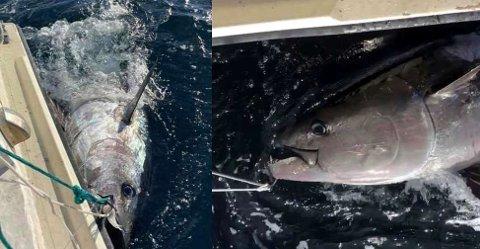 STORFANGST: Denne fiskeopplevelsen kommer aldri Thomas Hedum Tufte til å glemme. Foto: privat