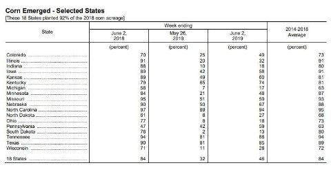 Slik ser det ut med maisavlingene i USA i år