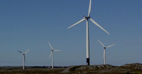 FORSKER PÅ FUGLEDØD: Forsking i Smøla vindpark viser at dødeligheten gikk ned med 70 prosent etter at ett av tre rotorblader ble malt svarte.
