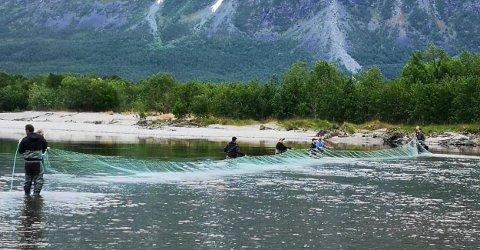 Her blir garnet trukket på tvers av Reisaelva for å fange stimen med pukkellaks. Foto: Reisa elvelag