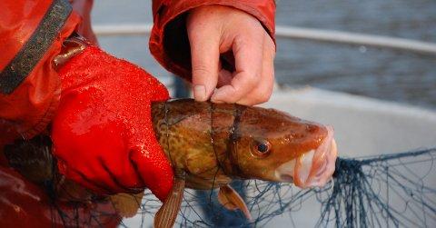 Det er alt for mange turistfiskere som tar med seg ren filet, og kaster verdifullt råstoff.
