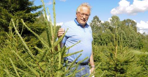 JULETREBONDE: I 2010 bestemte Arne Hofosseter seg for å plante juletrær i feltet bak stabburet på Rønåsen i Grue. Allerede nå kan du plukke ut det perfekte treet, og hente det til jul.