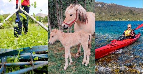 VARIERT: Gressklipper, Islandshest og kajakk er noe av det vi søker etter på Finn.