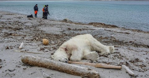 HANNBJØRN: Dette er bjørnen som ble avlivet etter at en tysk mann i 40-årene ble skadet av den.