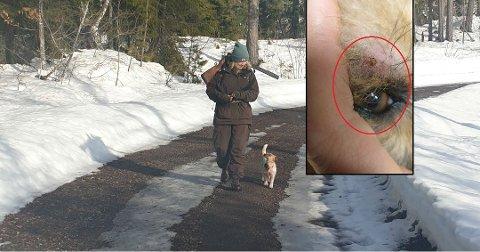 UVENTET: Beate Aannestad tok søndag kveld med seg hunden Diddi på en tur i skogen på Refsnes. Hun forventet ikke helt at de skulle få med seg en ubuden gjest hjem. Foto: Privat