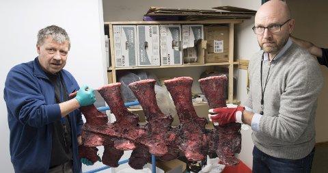 Ingeniør Johnny Magnussen og førsteamanuensis Terje Lislevand holder opp en del av ryggraden til Sotra-hvalen. – Det var selvsagt trist for hvalen at den måtte bøte med livet, men det er flott å kunne være med på å sette en så viktig sak på dagsordenen, sier Lislevand. Foto: Arne Ristesund