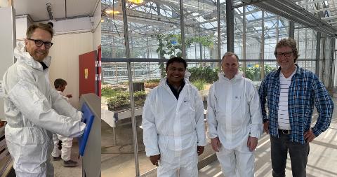 Grønnsaker: John Peter Hernes (t.h.), Kundan Kumar fra Indisk forening, Olemic Thommesen og Michel Verheul i NIBIO på sistnevntes anlegg på Særheim i Klepp.