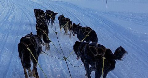 STOPPET: Mattilsynet har aksjonert og tatt vare på flere hunder. Nå forsøkes de omplassert. Hundene fra bildet tilhører en annen aktør.