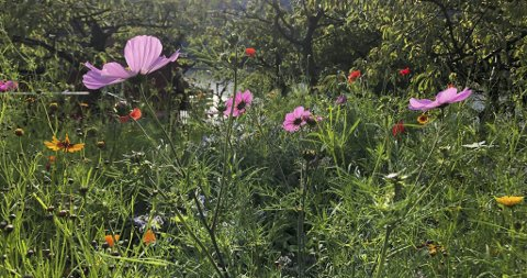 Slik blømde det i september i fjor i hagen Hanne Korff Lofthus fann inspirasjon i.