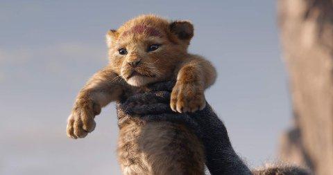 SIMBA: Det åpnet sterk for Simba og løvenes konge som måtte kjempe mot sommervarmen