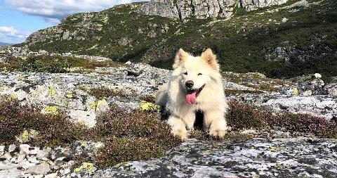 SAVNET: Denne hunden, 11 år gamle Bianka er savnet fra sitt hjem i Svene. Foto: Privat.