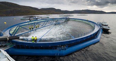 FUSJONER OG OPPKJØP: Gjennom transaksjoner i milliardklassen har NTS-konsernet rykket opp i lakseoppdretternes elitedivisjon. Bildet viser Midt-Norsk Havbruks lokalitet i Eiterfjorden i Nærøysund.