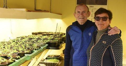 GRØNNE FINGRE: Grethe og Kjell Dølvik har grønne fingre som år etter år tryller fram et vell av sommerblomster.