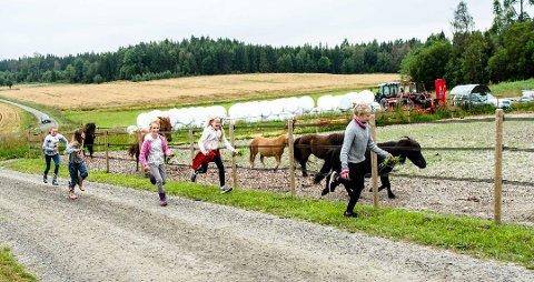 SKOLEFERIEAKTIVITETER PÅ GULL GÅRD: Maria, Maia, Ella, Emilie, og Kathrine nyter gårdslivet.