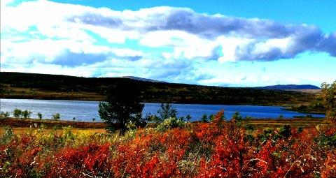 Fjellsjøen: Naturforvalteren vil ikke at det bygges større buer ved Fjellsjøen. Foto: Privat