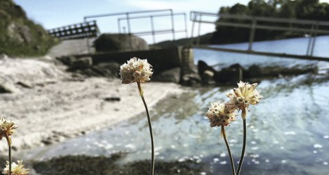 SNART BADESESONG: No kan du vera med å rydda ei strand nær deg. Her frå Fløksand i Meland.