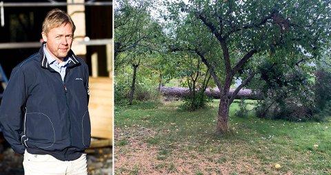 TREKRANGEL: Kommunen mener utbygger Espen Fasting ikke hadde lov til å felle dette treet på Bekkelaget. Fasting er uenig.
