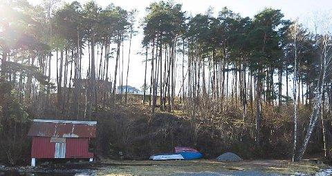 TYNNES UT: Slik ser skogen ved Heistadstranda ut fra sjøsiden. Det begynner å bli tynt. Bildet er fra rapporten som oversendes politiet.