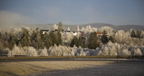 RIMFROSTEN: Snøen lar vente på seg, men morgentimene byr likevel på vinterlig stemning når rimfrosten henger i trærne, og i alle fall gir oss naturens maleri som her på Auvi. Foto: Bente Elmung