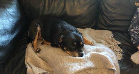 Hunden Kira er endelig hjemme i Moss, seks dager etter at hun ble tatt fra eieren på besøk i Oslo. Nå takker Line Langseth alle som har engasjert seg i letingen.