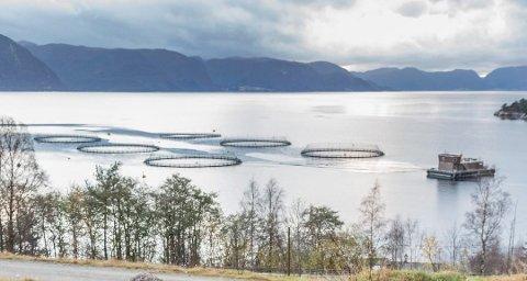 HAR VEDTEKE: Osland Havbruk har vedteke førelegget som Vest politidistrikt har ilagt dei, etter ulovleg avlusing. Her frå eit av verksemda sine anlegg i Torvundsvikja ved Høyanger.