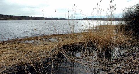 VITENSKAP: Innsenderen ber Naturvernforbundet dokumentere at roing på Borrevannet fortrenger våtmarksfugl.
