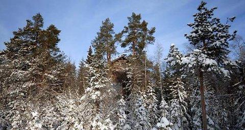 Furuhytta var den første Tretopphytta som ble reist i Ringsaker. Nå vil selskepaet Tretopphytter AS bygge fem nye.