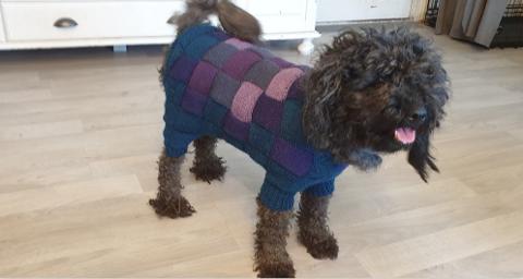 Dette bildet viser den nye genseren som er spesiallaget til pulien Hedda av hundeeier Gerd Smedstuen.