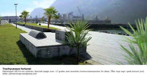 Forslag til egen bystrand i Mosjøen, Pålgården ved småbåthavna