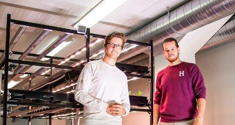 DYRKER I KJELLEREN: Jo André (til venstre) (24) og Martin (26) dyrker salat i kjelleren på Bright House i Mustad Næringspark.