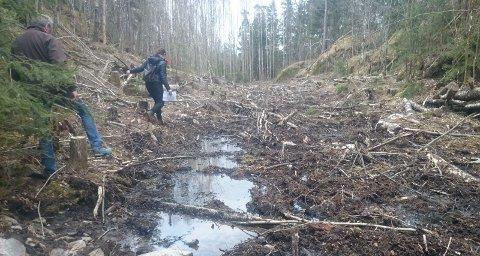 Vern av skog: Oppegård MDG maner til vedtak som de mener vil sikre at skogen behandles til beste for naturmangfold og livskvalitet.