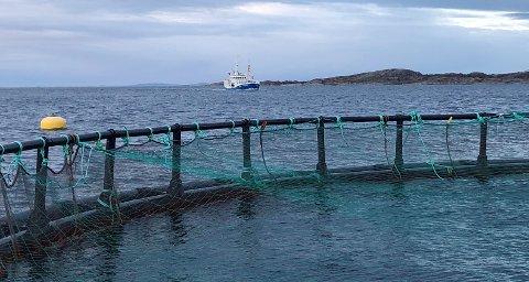 «Triton» på vei mot anlegget på ved Finnangerøya.