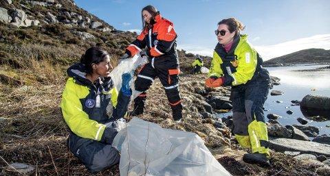Rundt 30 ansatte i Bergen reiste torsdag ut til øyene utenfor Solsvik i Fjell kommune for å plukke boss. Susann Hellesnes, Malin Nordby Kvamme og Gunhild Tinmannsvik fylte raskt en sekk med boss. alle FOTO: EIRIK HAGESÆTER