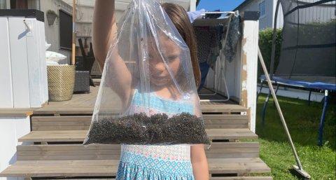 DAGENS FANGST: Pauline Bjerkland (7) viser fram myggen som ble tatt av myggfangeren på Vigernes i Lillestrøm.