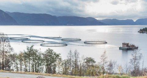OMSTRIDD: Det har vore mykje uro knytt til Osland havbruks anlegg på Torvundsvikja. No er det påvist ein uvanleg fiskesjukdom i anlegget.