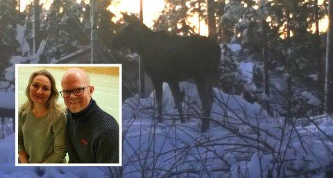 IKKE LETTSKREMT: Elgen startet å løpe etter David Ark da han forsøkte å skremme den vekk.