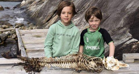 Spennande: Brørne Storm (9) og Håkon (5) Simpson-Hetlevik fann torsdag dette skjelettet i Gangstø nær Opsanger/Sunde.