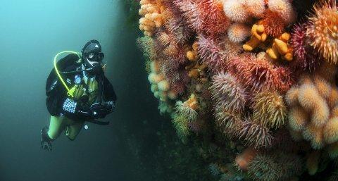 Populært: Undervannsopplevelser faller i smak blant besøkende i Lofoten.Foto: Lofoten Diving
