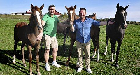 OMGITT AV HEST: Ole Jørgen Jørgentvedt og Ole-Marius Johnson lever tett på hestene sine hele året, nå er de med i tv-serien «Alt for dyra» på NRK.