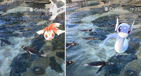 Pigvinene deler dammen med pokémonene «Goldeen» og «Dratini». (Skjermdump: Marie Skarpaas Karlsen)