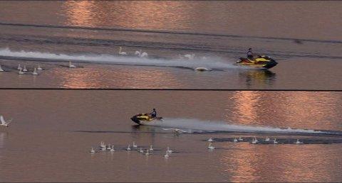 Her er det tatt bilde av to vannscooterførere som leker seg ved å kjøre gjennom en svaneflokk to ganger. Norsk Ornitoligisk Forening frykter vannscooterne.