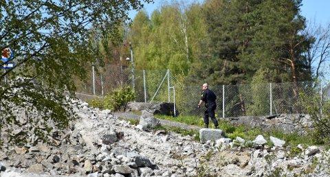 FANT ELGEN: En elg forvillet seg inn i Hønefoss sentrum og havnet til slutt i elven. Politiet fikk tilkalt viltnemnda.