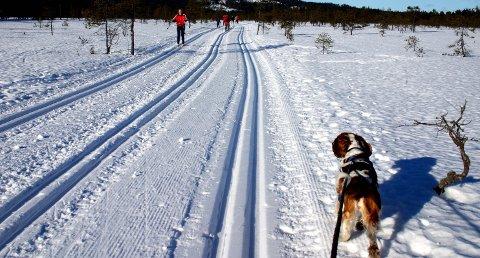 SILKEFØRE: Benytt anledningen før regnet kommer mandag. Her fra Høgsmåsan i Skedsmo.Foto: OLA EINBU